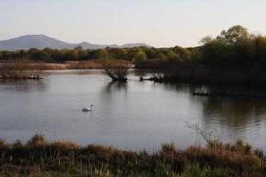 L' Oasi WWF del Lago di Alviano