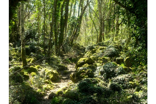 Selva del Lamone a Grotte di Castro