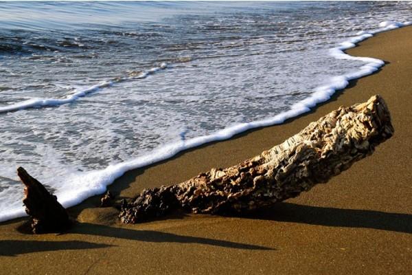Le Spiagge di Montalto di Castro