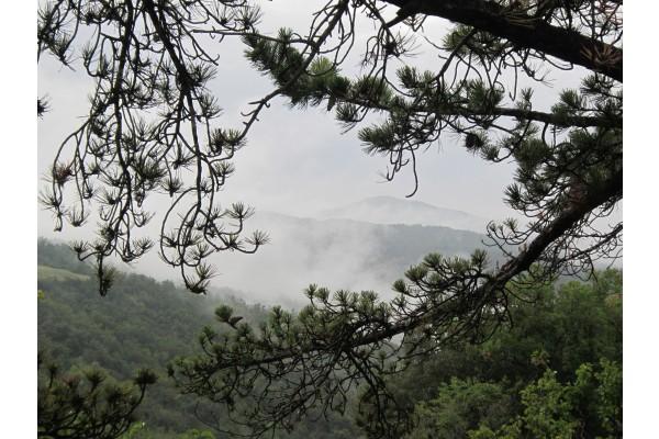La Riserva Naturale del Monte Rufeno