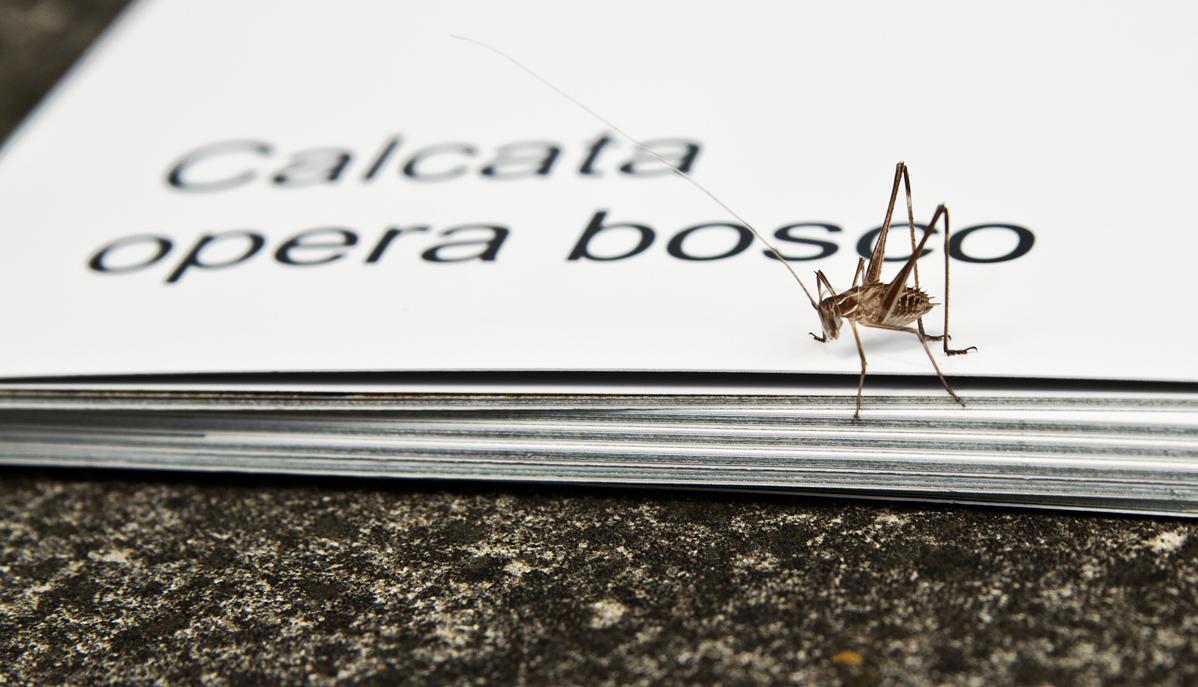 Museo Opera Bosco a Calcata: 25 Ottobre 2015