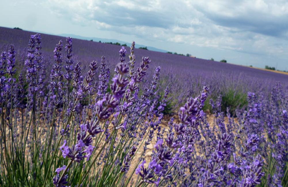 Agricoltura nella Tuscia: tra tradizione e originalità